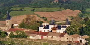 Vignoble du Château d'Émeringes vue du clos arrière